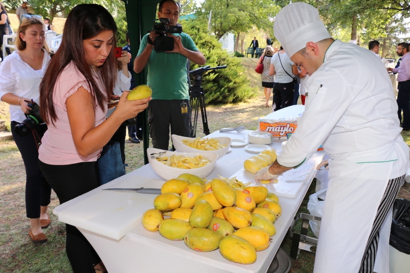 Guests enjoying freshely arrived mangos arrived from Pakistan